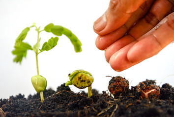 seed to tree, Seeding, Plant seed growing concept