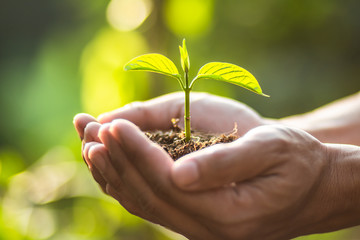 Planting trees Tree Care save world,The hands are protecting the seedlings in nature and the light of the evening