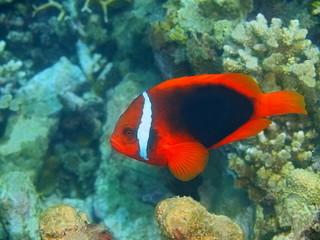 Fishclown