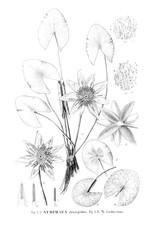 Illustration of Lily.