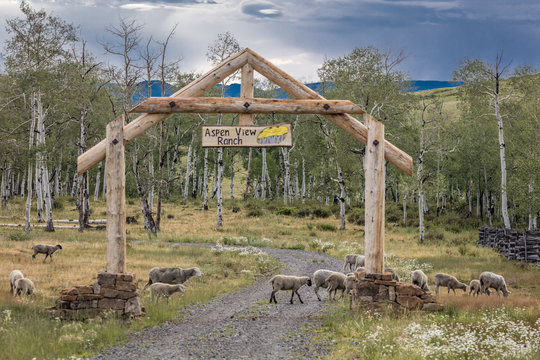Aspen View Ranch gate in San Juan Mountains, Hastings Mesa, near Ridgway and Telluride Colorado  with sheep owned by photographer Joe Sohm