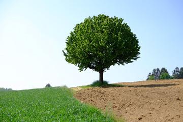 Ein Baum wirft Schatten