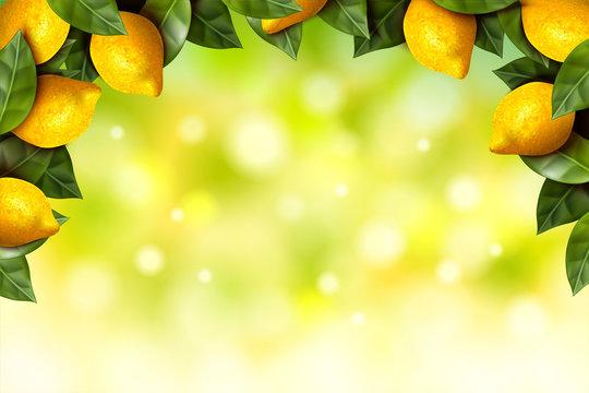 Lemon orchard frame
