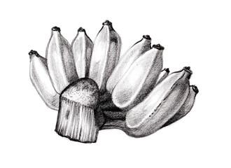 Banana branch hand sketch