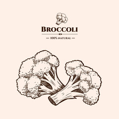 Vector background with broccoli. Hand drawn. Vintage style