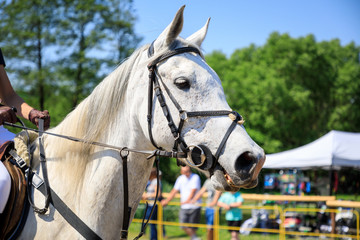 The horse on an equestrian event