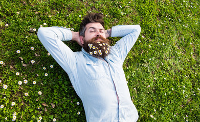 Hipster on calm face lays on grass, top view. Appeasement concept. Guy looks nicely with daisy or chamomile flowers in beard. Man with beard and mustache enjoys spring, green meadow background.