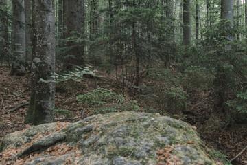 Forest scenery. Natural landscape. Wilderness.