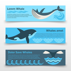 Wild whales banners template
