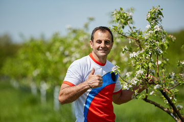 Farmer in his orchard of apple trees