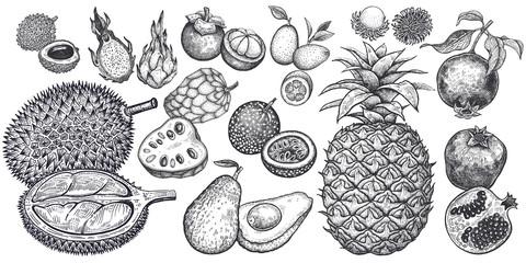 Exotic fruits isolated set.