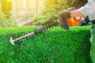 Canvas Prints Green Garden gasoline scissors, trimming green bush, hedge. Working in the garden.