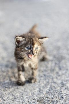 Aggressive young cat, Havana, Cuba