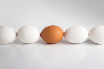Individuality; uniqueness. Group of white eggs and one beige; brown concept exclusivity; better choice; loneliness; rejection