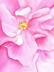 Watercolor pink flower bud. Floral greeting card. Floral wedding design. Invitation with pink rose.