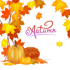Vector banner Pumpkin on a background of yellow and orange foliage