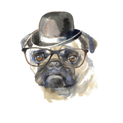 Pug dog - hand painted, isolated on white background watercolor fashion cute dog portrait
