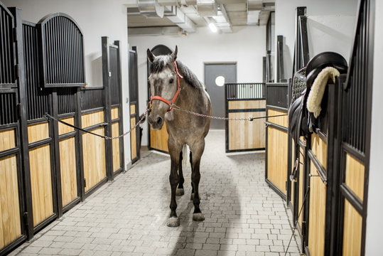Beautiful horse standing in the stable ready for equiping with seat