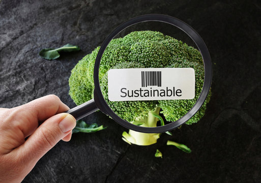 Sustainable food concept