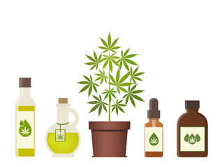 Marijuana plant and cannabis oil. Medical marijuana. Hemp oil in a jar. CBD oil hemp products. Oil glass bottle mock up. Packaging product label and logo graphic template. Vector illustration.