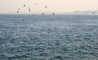 bosphorus, istanbul with seagulls and dolphins