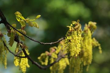 Spring seeds
