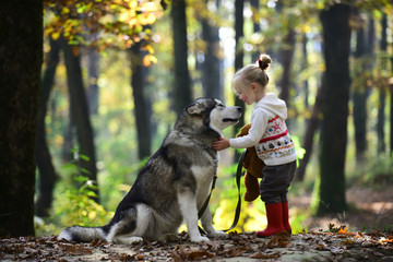 Red riding hood with wolf in fairy tale woods. Little girl with dog in autumn forest. Childhood, game and fun. Child play with husky and teddy bear on fresh air outdoor. Activity and active rest