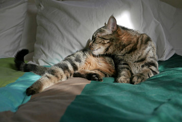 Cat on bed, washing