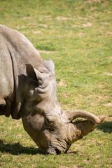 Rhinocéros d'Afrique Planète sauvage Nantes France