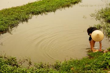 Woman in rice paddy in Vietnam harvesting