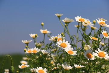 Wall Mural - summer flowers landscape
