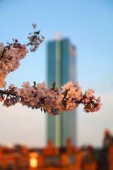 Springtime Blurs