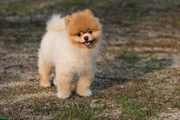 Dog Pet Puppy Cute Dog