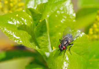 The fly sits on a green sheet.