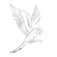 Sketch parrot for children's coloring.