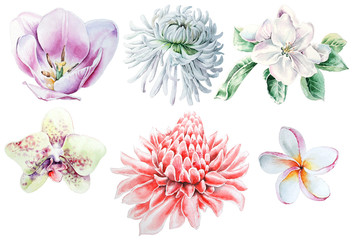 Set with watercolor flowers. Tulip. Chrysanthemum. Orchid Plumeria. Etlingera.  Hand drawn.