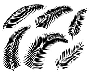 Palm Leaf Silhouettes