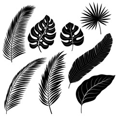 Silhouettes of Palm Leafs
