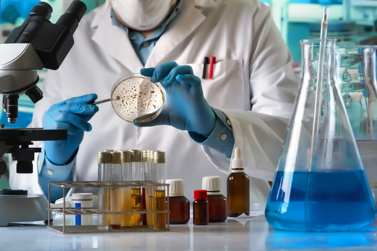 scientist hand cultivating petri dish whit inoculation loops in the laboratory / technician researcher working with petri plate and microscope