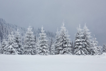 Great winter photo in Carpathian mountains with snow covered fir trees. Colorful outdoor scene, Happy New Year celebration concept. Artistic style post processed photo