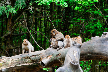 Monkey family sitting on the tree in park