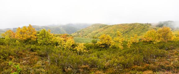 Vista panorámica de paisaje de Otoño con Colinas y Bosques de Robles  entre  niebla y nubes bajas y brezos en primer plano