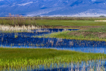 The beautiful marsh in Alamosa National Wildlife Refuge near Blanca Mountain, which is part of the Sangre de Cristo range of the Rocky Mountains in southern Colorado