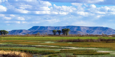 The beautiful marsh in Alamosa National Wildlife Refuge at the edge of the Sangre de Cristo range of the Rocky Mountains in southern Colorado