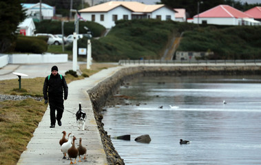 A man walks his dog as geese walk on the shore of Port Stanley