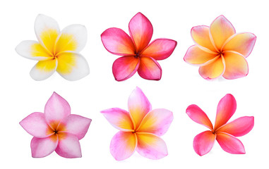 Spoed Fotobehang Frangipani set of white frangipani (plumeria) flower isolated on white background