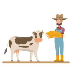 dairy farm, farmer give straw for milk cow