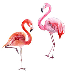 Beautiful pink flamingo isolated on white background. Couple of exotic birds. Watercolor painting.