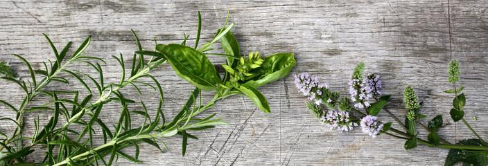 Frische Gartenkräuter