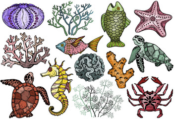 Ocean life organisms, shells, fish, corals, sea horse, crab and turtle.
